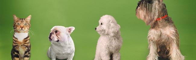 Assicuraione animali domestici