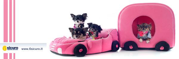Animali domestici in auto?