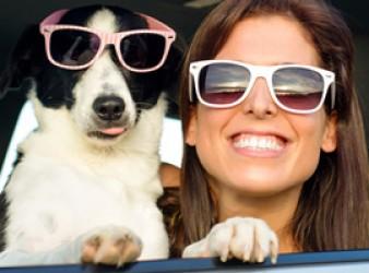 Codice della Strada: come trasportare un cane