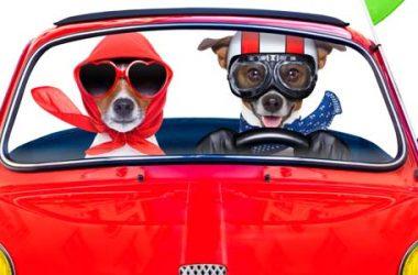 IVASS: il costo dell'assicurazione auto è in calo