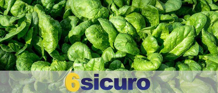 mandragora spinaci bonduelle